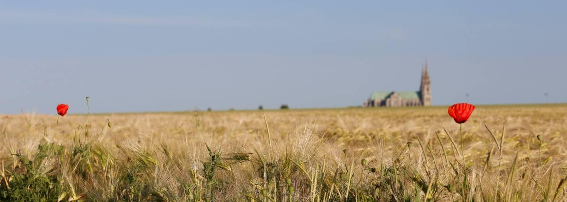 Vue de la cathédrale de Chartres depuis les champs de blé