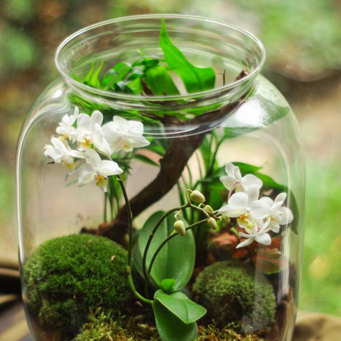 Illustration d'un atelier de création de terrarium - © Pexels